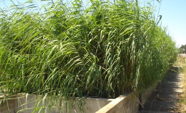 lits de séchage plantés